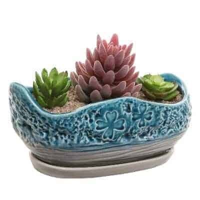large blue succulent planter