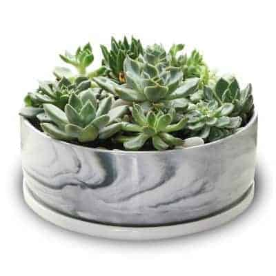 succulent bowl with marble pattern