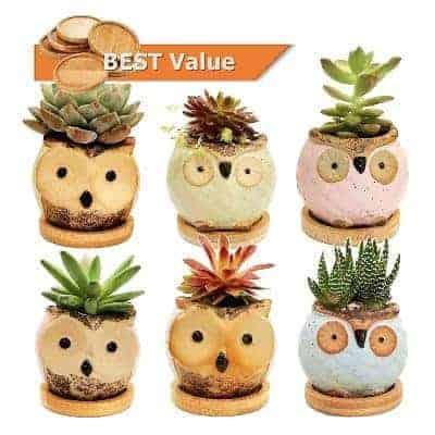 Owl succulent pots pack