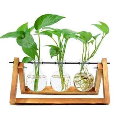 propagation wood set