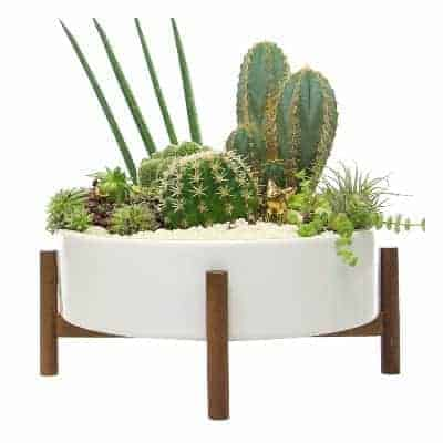 white succulent bowl with wood support