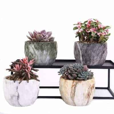 stylish marble succulent planters