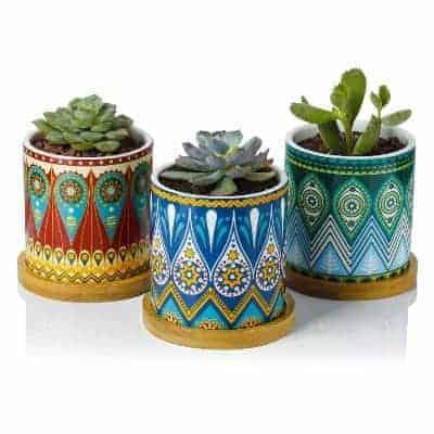 mandala succulent planters