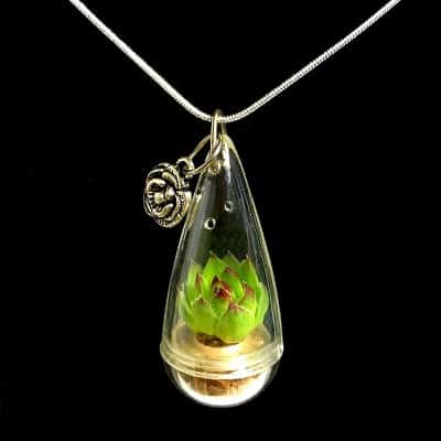 wearable succulent