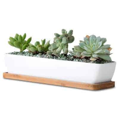 white succulent planter box