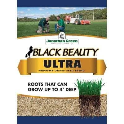black beauty grass seed