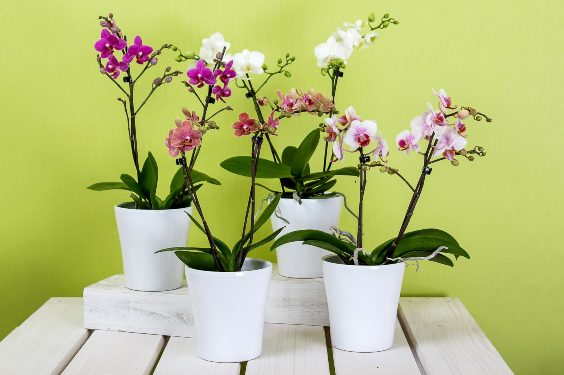 4 orchids on a table