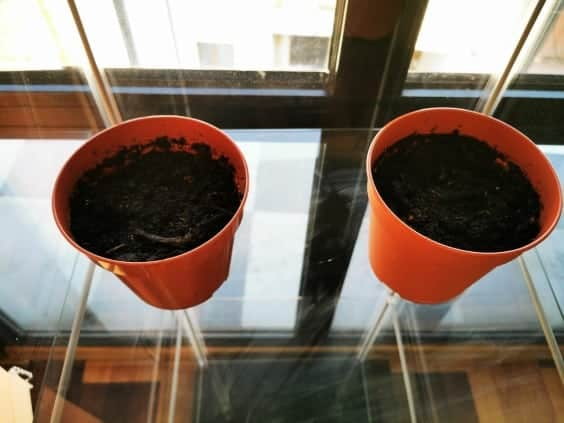 pots with soil