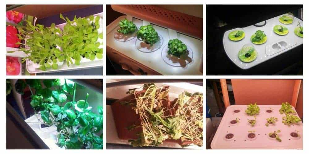 collage of 6 of the best indoor herb garden kits
