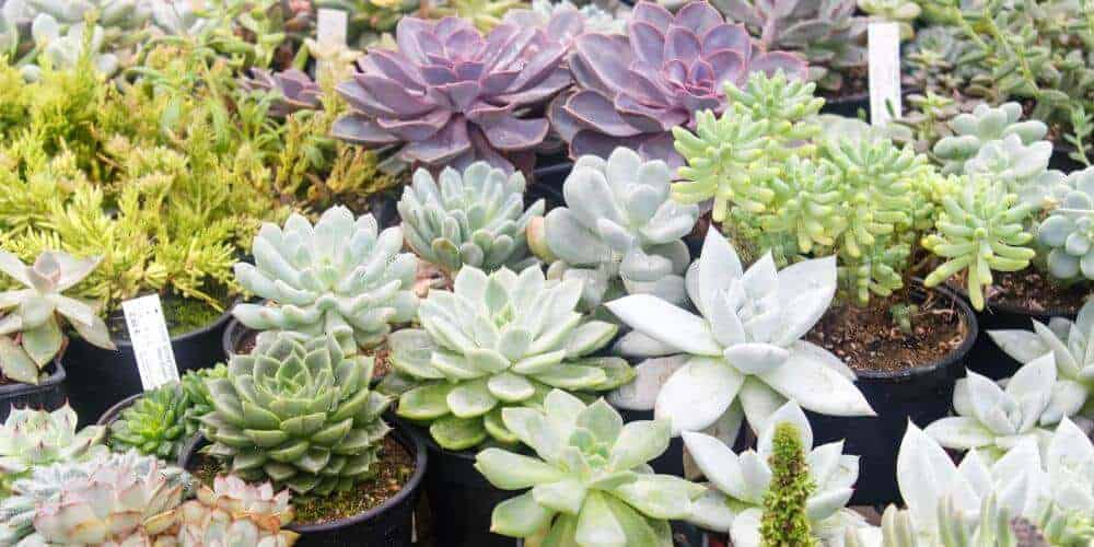 multiple types of succulents