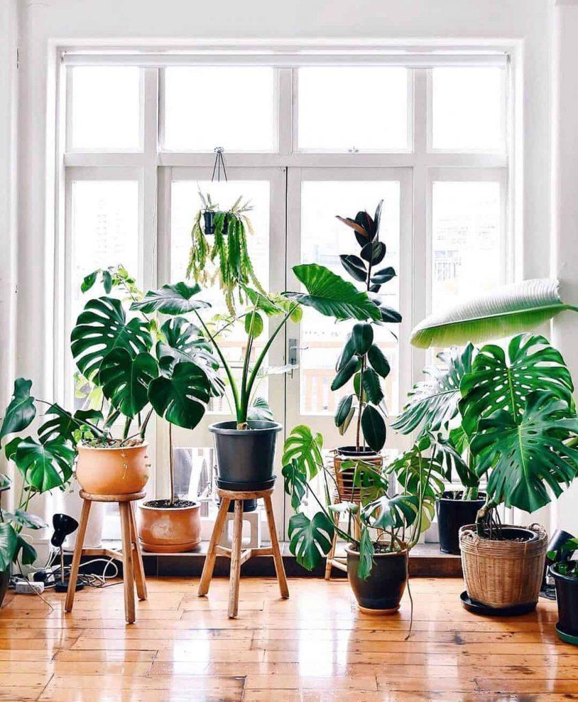 Best shade plants