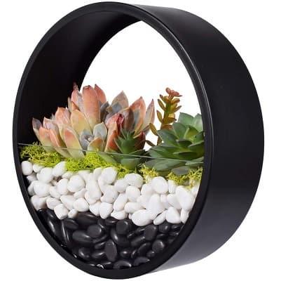 succulent wall metal terrarium