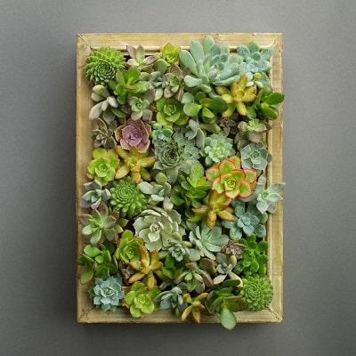 succulent wall ideas