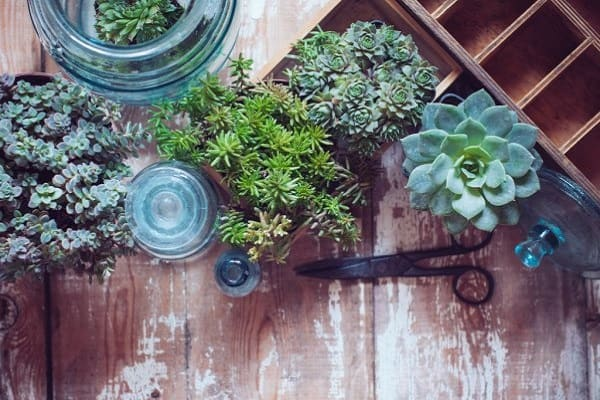 succulent wall guide