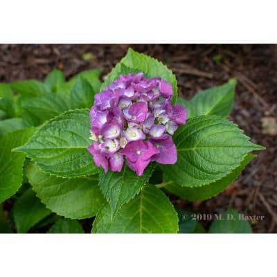 perennials to plant in fall