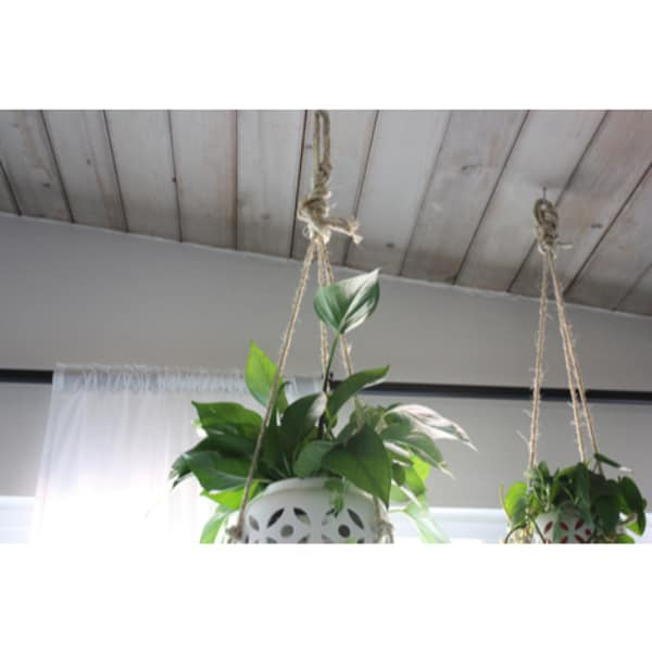 how to hang plants from the ceiling